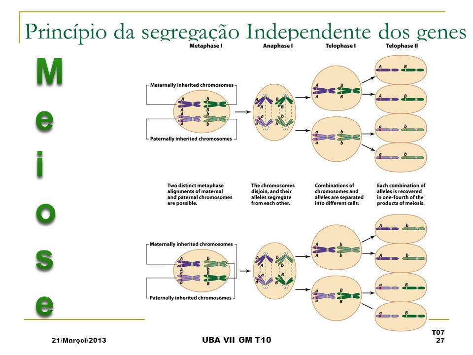 Princípio da segregação Independente dos genes 21/Marçol/2013 T07 27 UBA VII GM T10