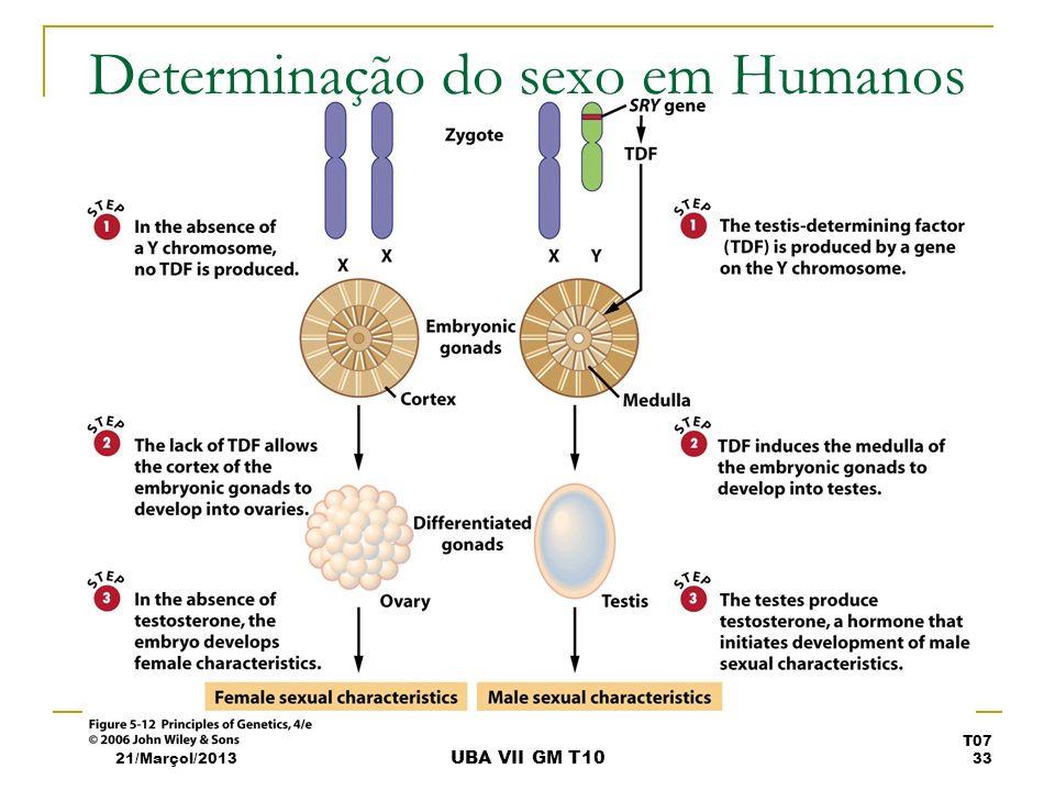 Determinação do sexo em Humanos 21/Marçol/2013 T07 33 UBA VII GM T10