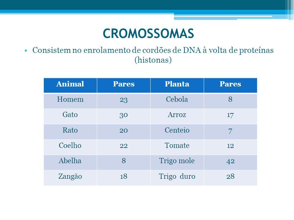 CROMOSSOMAS Consistem no enrolamento de cordões de DNA à volta de proteínas (histonas) AnimalParesPlantaPares Homem23Cebola8 Gato30Arroz17 Rato20Cente