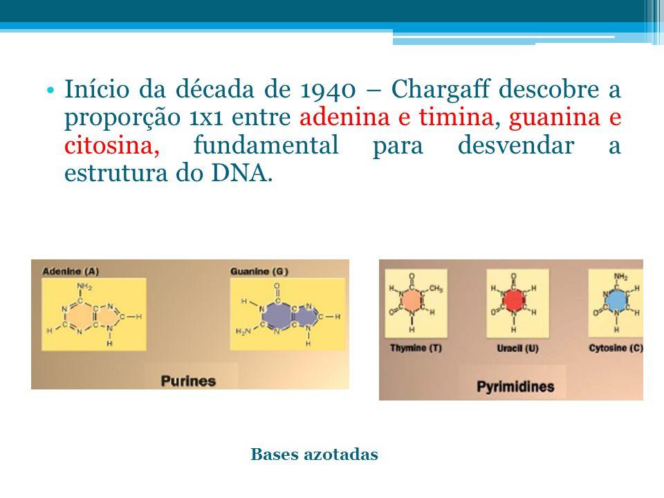 Início da década de 1940 – Chargaff descobre a proporção 1x1 entre adenina e timina, guanina e citosina, fundamental para desvendar a estrutura do DNA