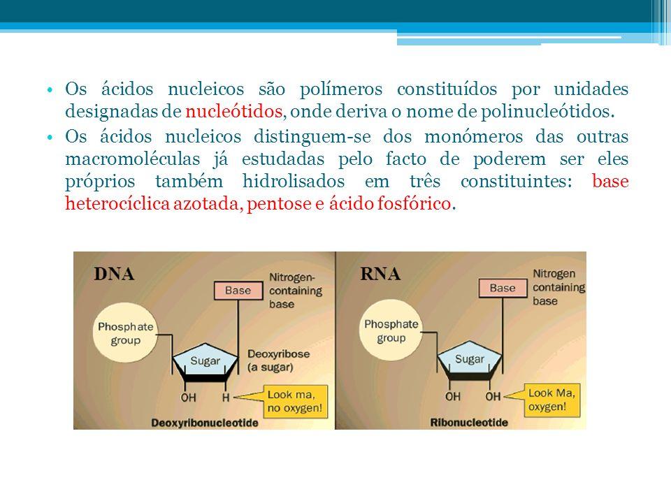 Os ácidos nucleicos são polímeros constituídos por unidades designadas de nucleótidos, onde deriva o nome de polinucleótidos. Os ácidos nucleicos dist