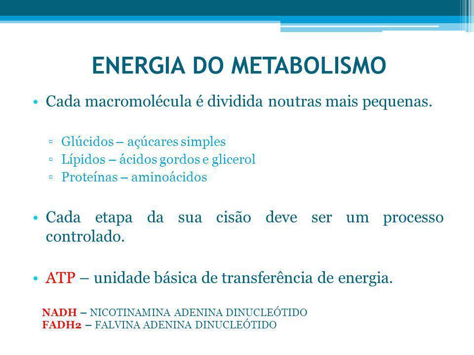 ENERGIA DO METABOLISMO Cada macromolécula é dividida noutras mais pequenas. Glúcidos – açúcares simples Lípidos – ácidos gordos e glicerol Proteínas –