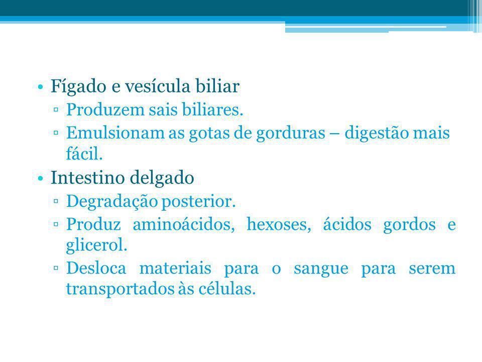 Fígado e vesícula biliar Produzem sais biliares. Emulsionam as gotas de gorduras – digestão mais fácil. Intestino delgado Degradação posterior. Produz