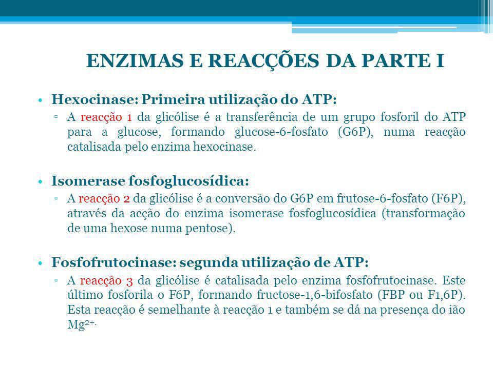 Hexocinase: Primeira utilização do ATP: A reacção 1 da glicólise é a transferência de um grupo fosforil do ATP para a glucose, formando glucose-6-fosf