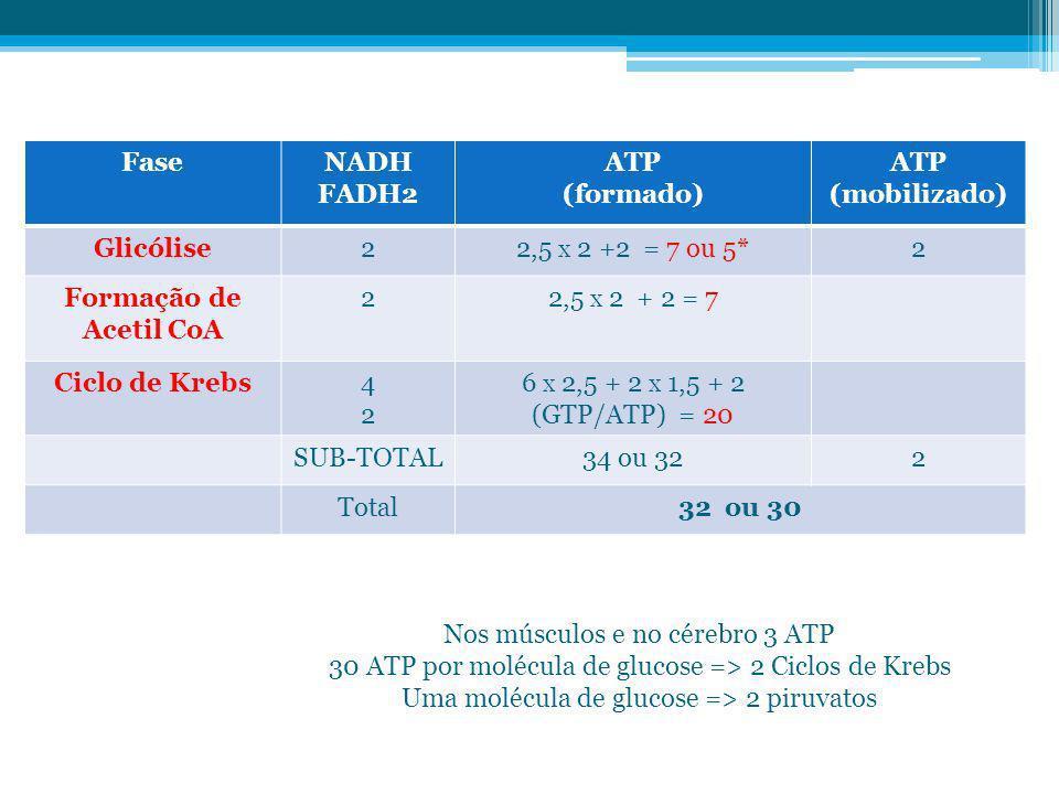 FaseNADH FADH2 ATP (formado) ATP (mobilizado) Glicólise22,5 X 2 +2 = 7 ou 5*2 Formação de Acetil CoA 22,5 X 2 + 2 = 7 Ciclo de Krebs4242 6 X 2,5 + 2 X