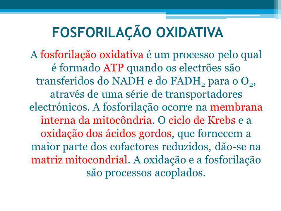FOSFORILAÇÃO OXIDATIVA A fosforilação oxidativa é um processo pelo qual é formado ATP quando os electrões são transferidos do NADH e do FADH 2 para o