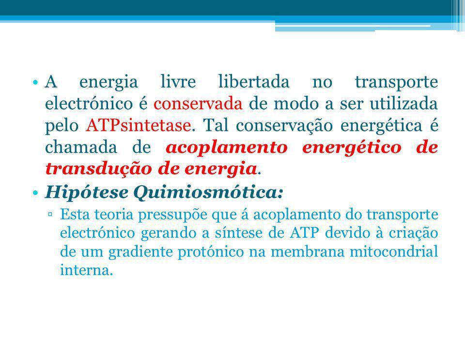 A energia livre libertada no transporte electrónico é conservada de modo a ser utilizada pelo ATPsintetase. Tal conservação energética é chamada de ac