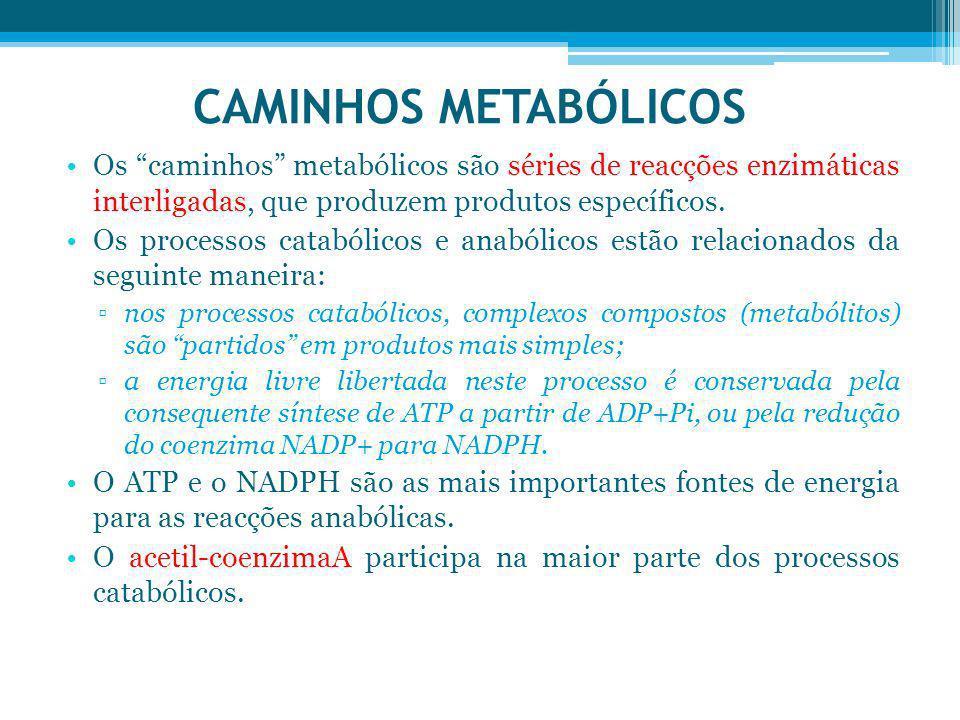 CAMINHOS METABÓLICOS Os caminhos metabólicos são séries de reacções enzimáticas interligadas, que produzem produtos específicos. Os processos catabóli