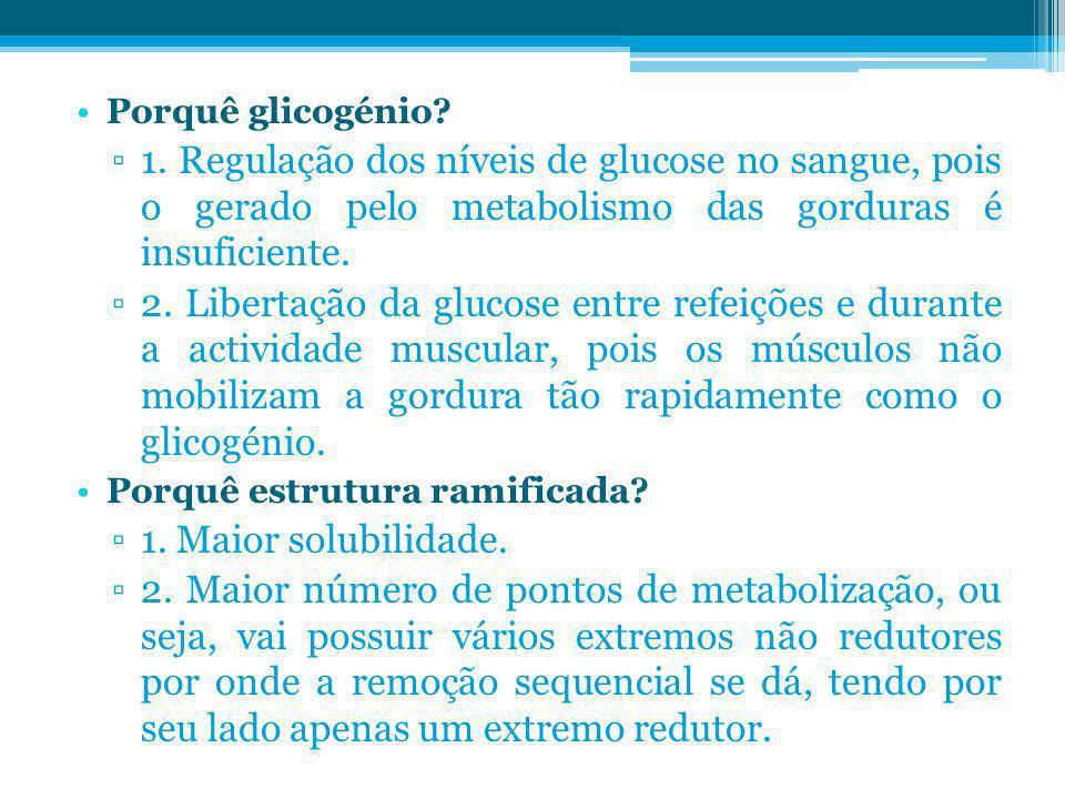 Porquê glicogénio? 1. Regulação dos níveis de glucose no sangue, pois o gerado pelo metabolismo das gorduras é insuficiente. 2. Libertação da glucose
