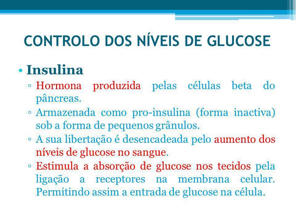 CONTROLO DOS NÍVEIS DE GLUCOSE Insulina Hormona produzida pelas células beta do pâncreas. Armazenada como pro-insulina (forma inactiva) sob a forma de