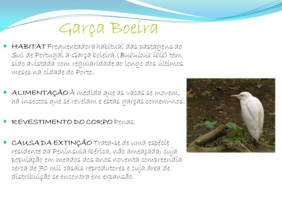 Garça Boeira HABITAT Frequentadora habitual das pastagens do Sul de Portugal a Garça boieira (Bubulcus ibis) tem sido avistada com regularidade ao lon