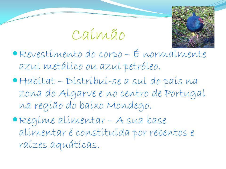 Caímão Revestimento do corpo – É normalmente azul metálico ou azul petróleo. Habitat – Distribui-se a sul do pais na zona do Algarve e no centro de Po
