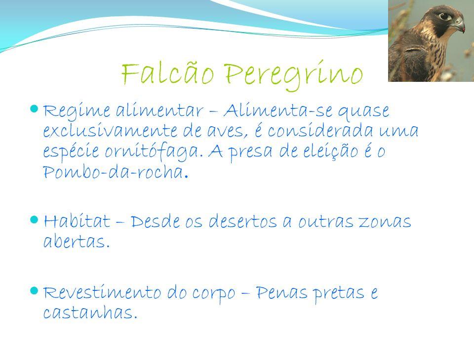 Falcão Peregrino Regime alimentar – Alimenta-se quase exclusivamente de aves, é considerada uma espécie ornitófaga. A presa de eleição é o Pombo-da-ro