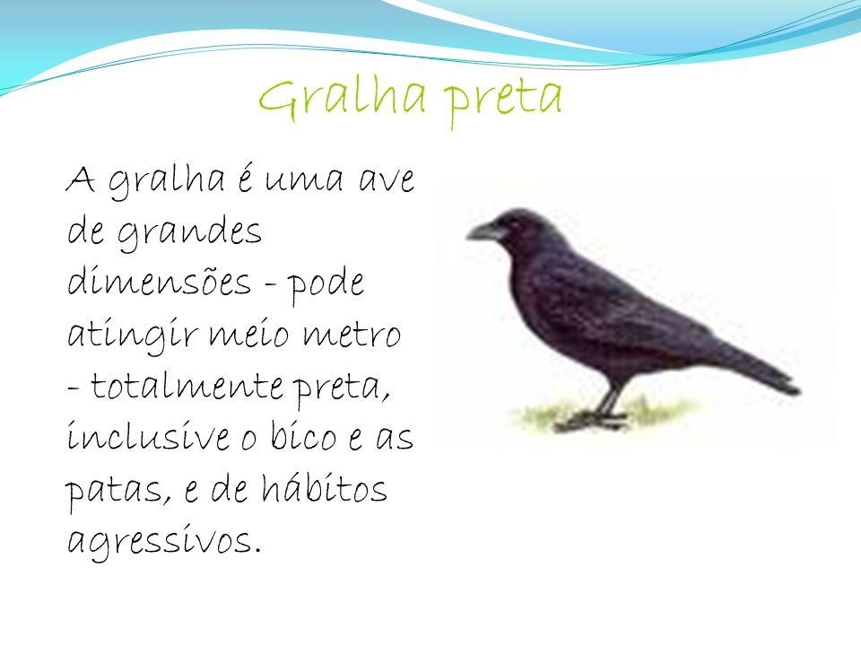 A gralha é uma ave de grandes dimensões - pode atingir meio metro - totalmente preta, inclusive o bico e as patas, e de hábitos agressivos. Gralha pre