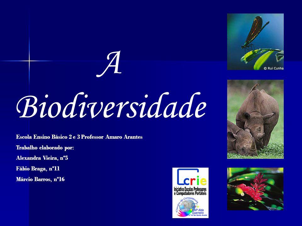 A Biodiversidade Escola Ensino Básico 2 e 3 Professor Amaro Arantes Trabalho elaborado por: Alexandra Vieira, nº5 Fábio Braga, nº11 Márcio Barros, nº1