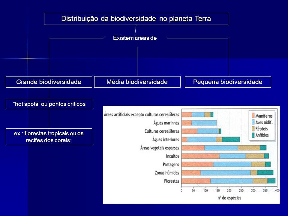 Distribuição da biodiversidade no planeta Terra Existem áreas de Pequena biodiversidadeGrande biodiversidadeMédia biodiversidade hot spots ou pontos c