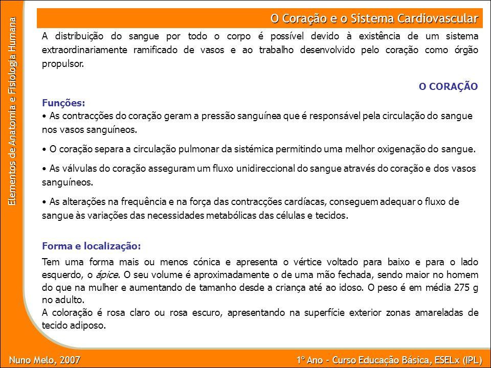 Nuno Melo, 2007 1º Ano - Curso Educação Básica, ESELx (IPL) Elementos de Anatomia e Fisiologia Humana O Cora ç ão e o Sistema Cardiovascular A distrib