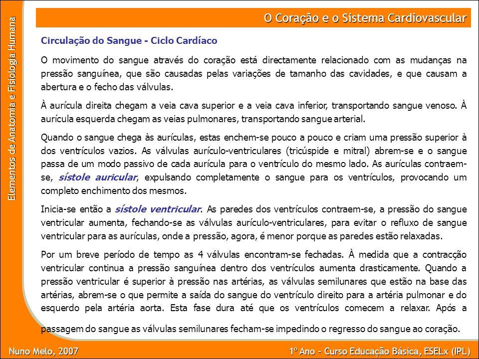 Nuno Melo, 2007 1º Ano - Curso Educação Básica, ESELx (IPL) Elementos de Anatomia e Fisiologia Humana O Cora ç ão e o Sistema Cardiovascular Circulaçã