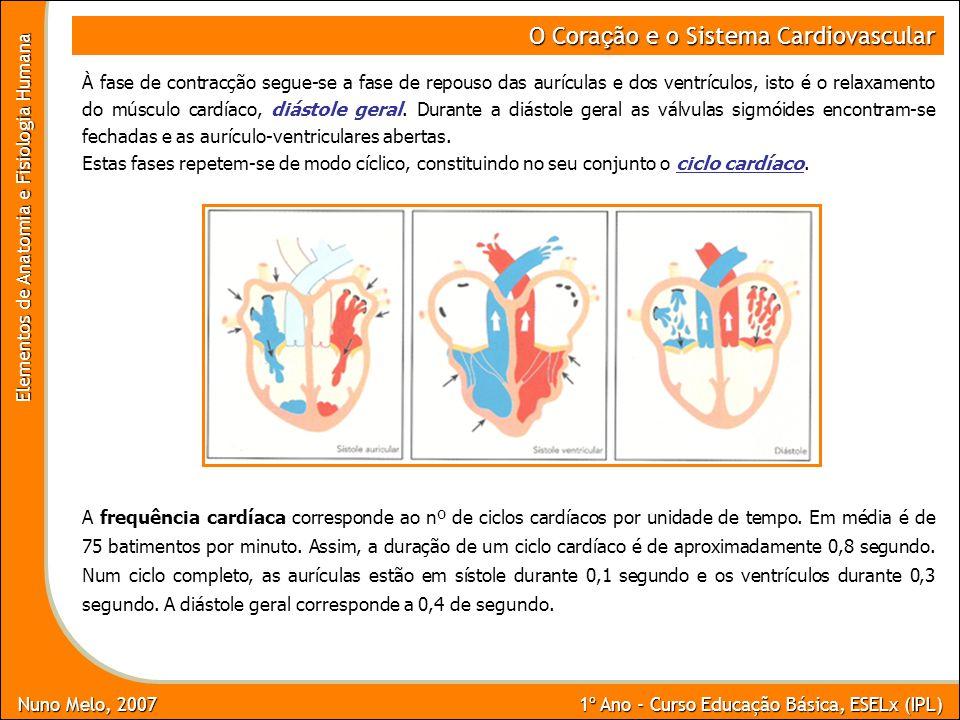 Nuno Melo, 2007 1º Ano - Curso Educação Básica, ESELx (IPL) Elementos de Anatomia e Fisiologia Humana O Cora ç ão e o Sistema Cardiovascular À fase de
