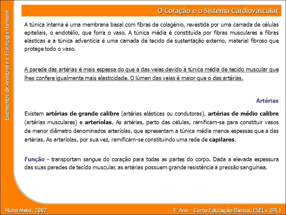 Nuno Melo, 2007 1º Ano - Curso Educação Básica, ESELx (IPL) Elementos de Anatomia e Fisiologia Humana O Cora ç ão e o Sistema Cardiovascular A túnica