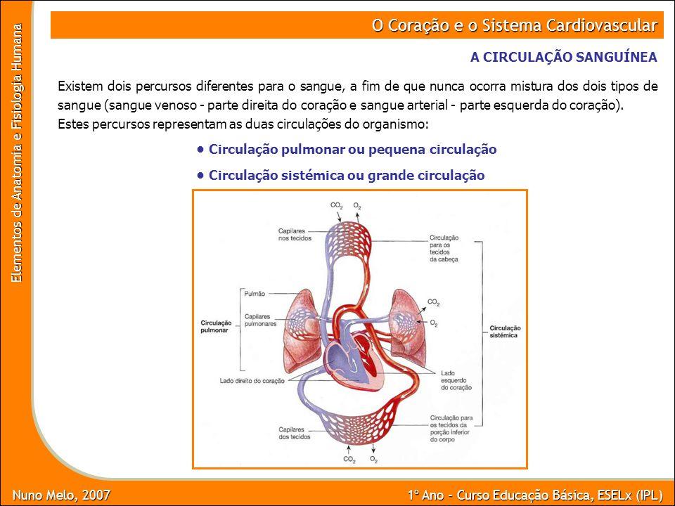 Nuno Melo, 2007 1º Ano - Curso Educação Básica, ESELx (IPL) Elementos de Anatomia e Fisiologia Humana O Cora ç ão e o Sistema Cardiovascular A CIRCULA