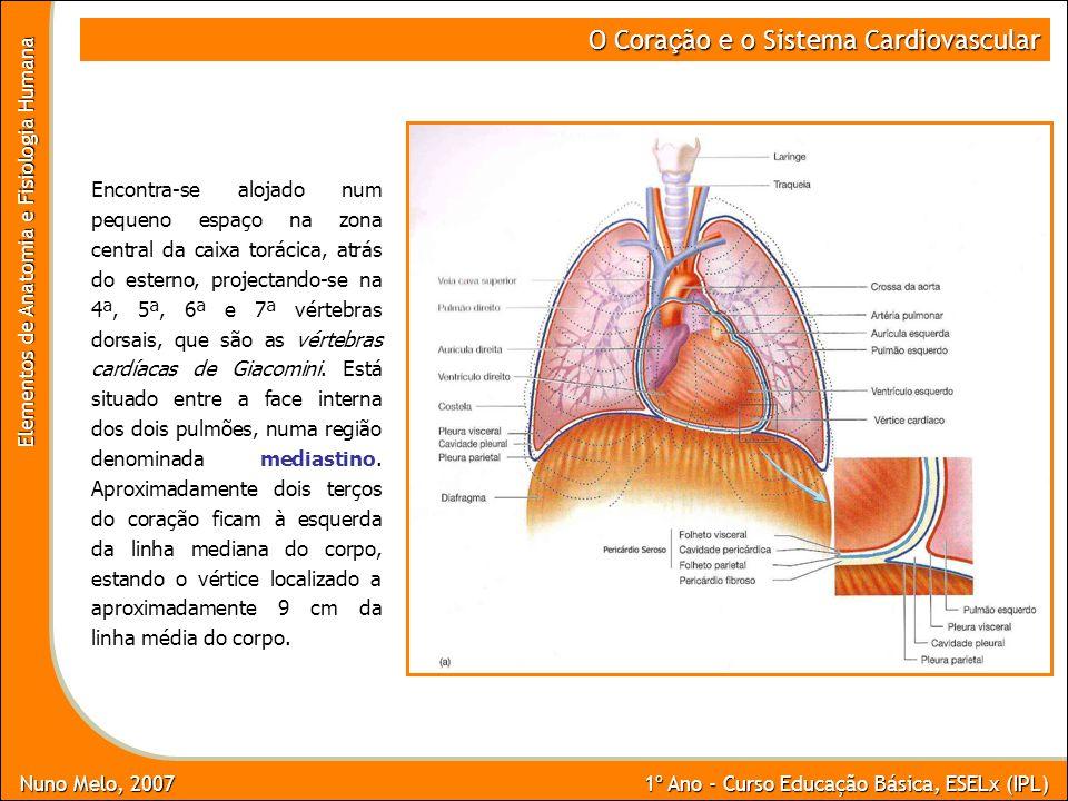 Nuno Melo, 2007 1º Ano - Curso Educação Básica, ESELx (IPL) Elementos de Anatomia e Fisiologia Humana O Cora ç ão e o Sistema Cardiovascular Encontra-