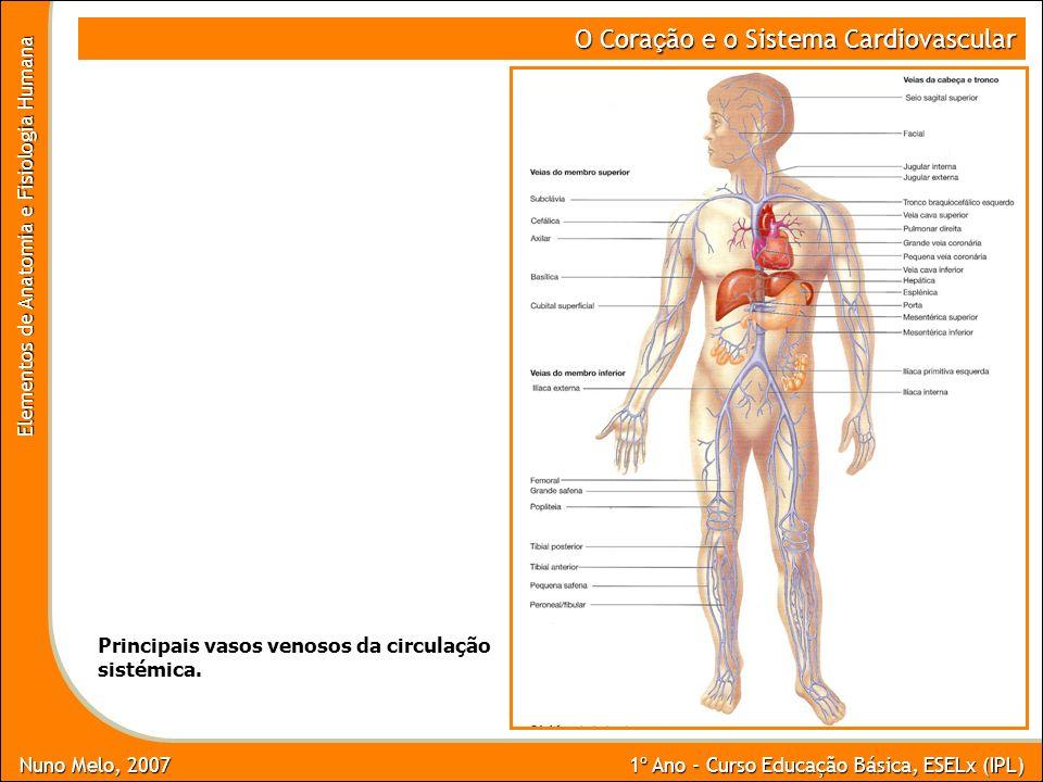 Nuno Melo, 2007 1º Ano - Curso Educação Básica, ESELx (IPL) Elementos de Anatomia e Fisiologia Humana O Cora ç ão e o Sistema Cardiovascular Principai