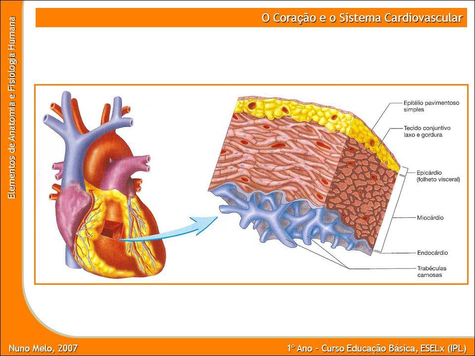 Nuno Melo, 2007 1º Ano - Curso Educação Básica, ESELx (IPL) Elementos de Anatomia e Fisiologia Humana O Cora ç ão e o Sistema Cardiovascular