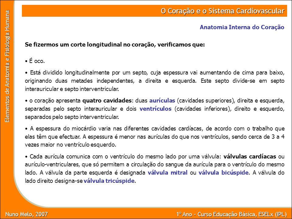 Nuno Melo, 2007 1º Ano - Curso Educação Básica, ESELx (IPL) Elementos de Anatomia e Fisiologia Humana O Cora ç ão e o Sistema Cardiovascular Anatomia