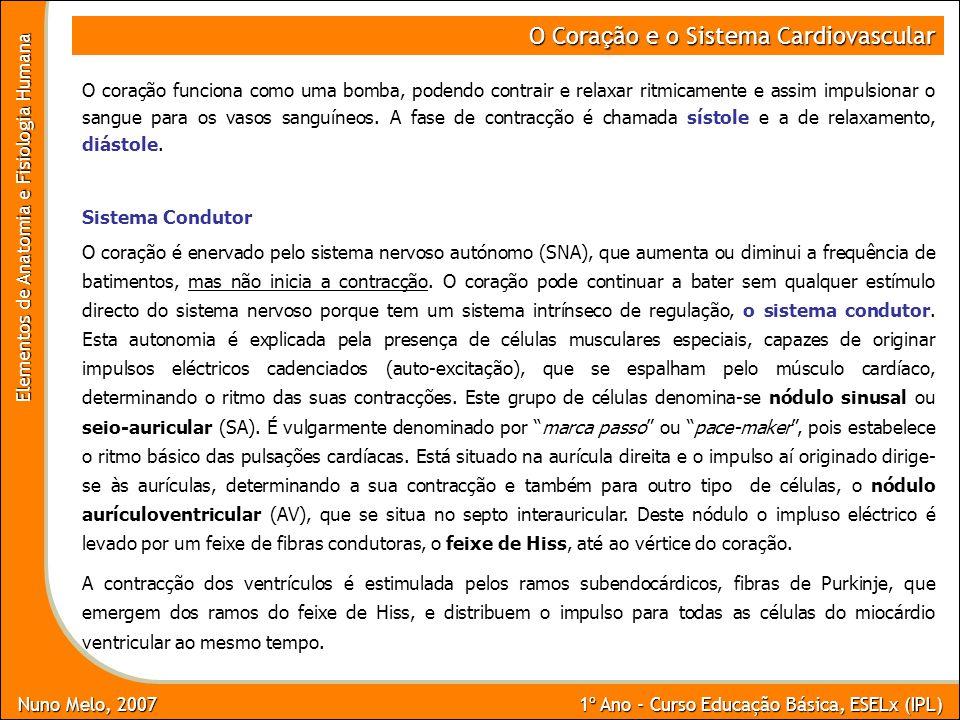 Nuno Melo, 2007 1º Ano - Curso Educação Básica, ESELx (IPL) Elementos de Anatomia e Fisiologia Humana O Cora ç ão e o Sistema Cardiovascular O coração
