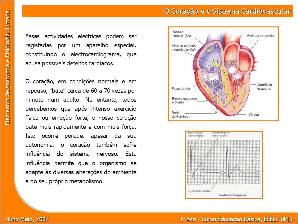 Nuno Melo, 2007 1º Ano - Curso Educação Básica, ESELx (IPL) Elementos de Anatomia e Fisiologia Humana O Cora ç ão e o Sistema Cardiovascular Essas act