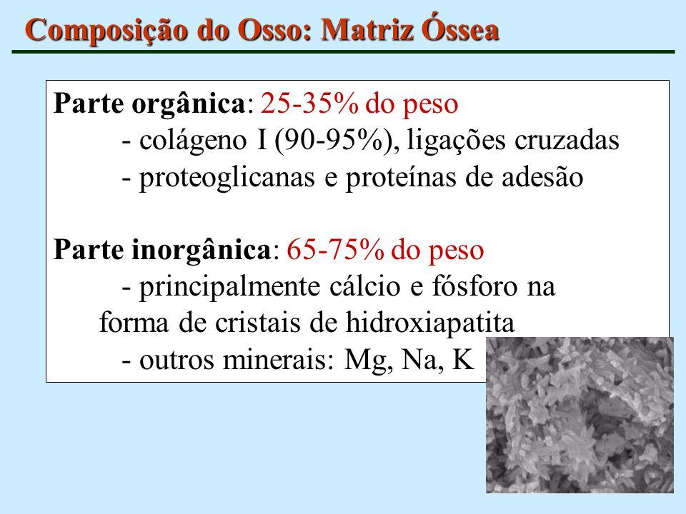 Composição do Osso: Matriz Óssea Parte orgânica: 25-35% do peso - colágeno I (90-95%), ligações cruzadas - proteoglicanas e proteínas de adesão Parte