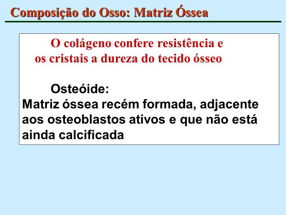 Composição do Osso: Matriz Óssea O colágeno confere resistência e os cristais a dureza do tecido ósseo Osteóide: Matriz óssea recém formada, adjacente