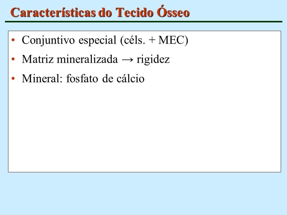 Características do Tecido Ósseo Conjuntivo especial (céls. + MEC) Matriz mineralizada rigidez Mineral: fosfato de cálcio