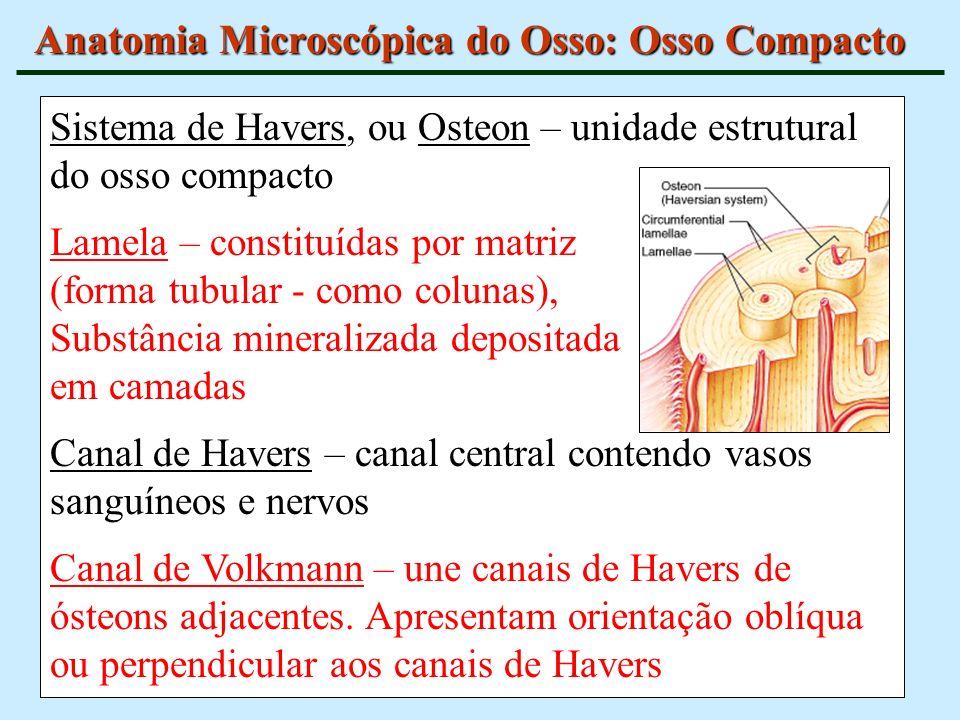 Sistema de Havers, ou Osteon – unidade estrutural do osso compacto Lamela – constituídas por matriz (forma tubular - como colunas), Substância mineral
