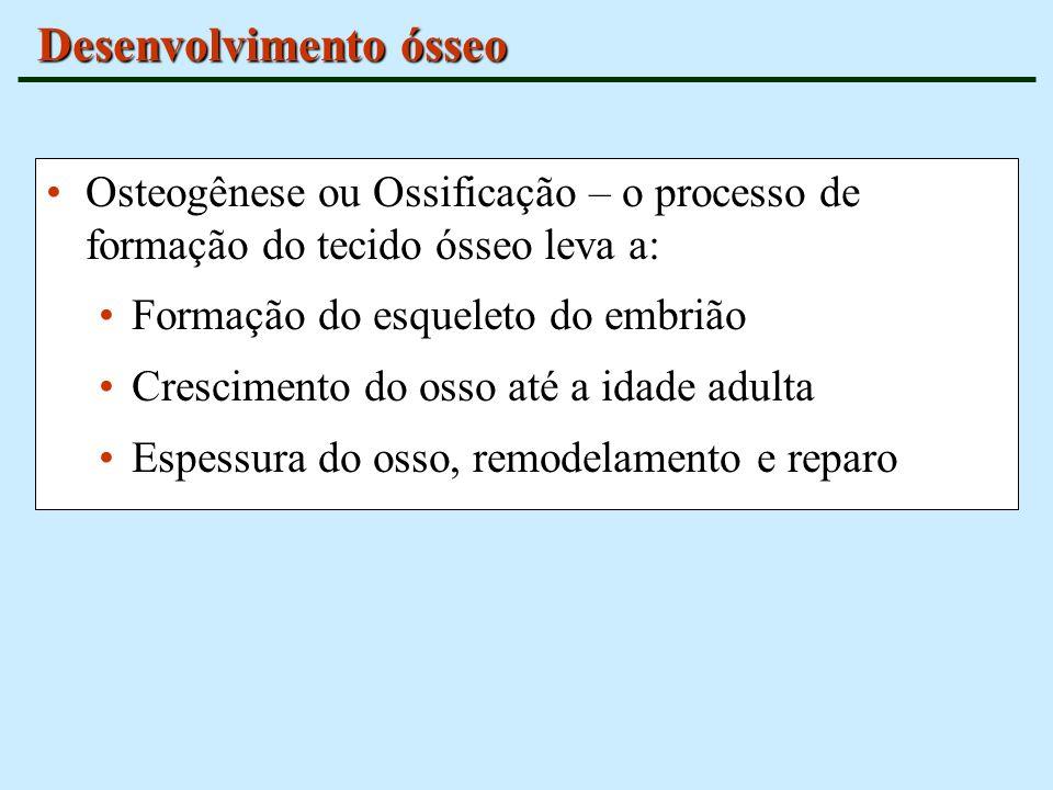 Desenvolvimento ósseo Osteogênese ou Ossificação – o processo de formação do tecido ósseo leva a: Formação do esqueleto do embrião Crescimento do osso