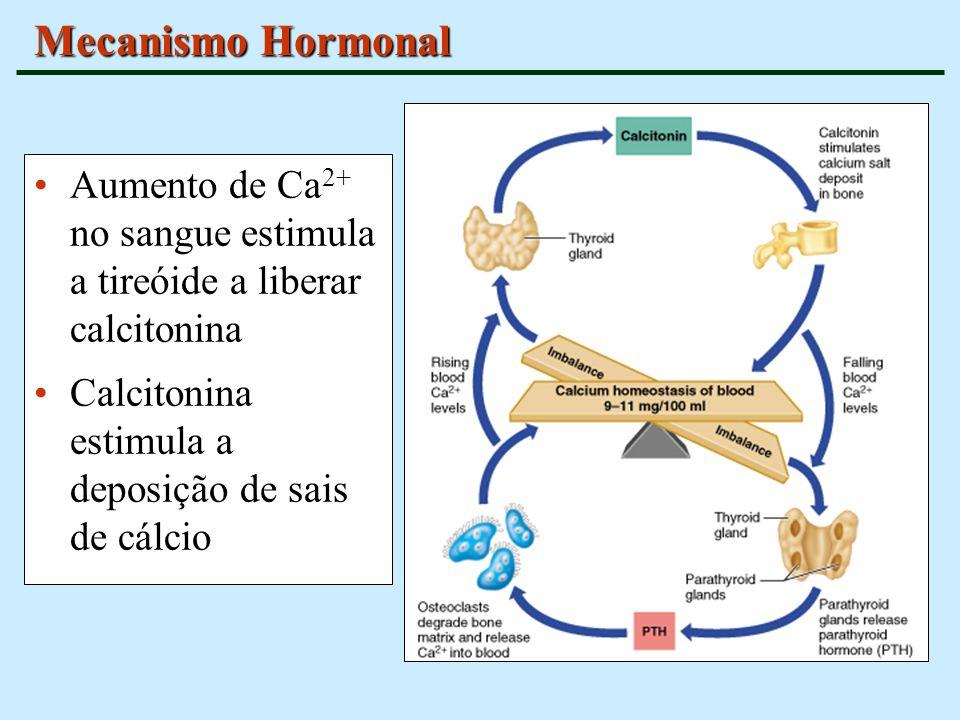 Mecanismo Hormonal Aumento de Ca 2+ no sangue estimula a tireóide a liberar calcitonina Calcitonina estimula a deposição de sais de cálcio