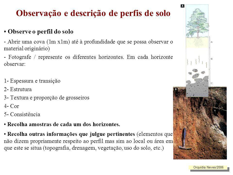 Observação e descrição de perfis de solo Observe o perfil do solo - Abrir uma cova (1m x1m) até à profundidade que se possa observar o material origin