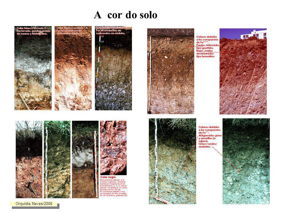 A cor do solo Orquídia Neves/2006