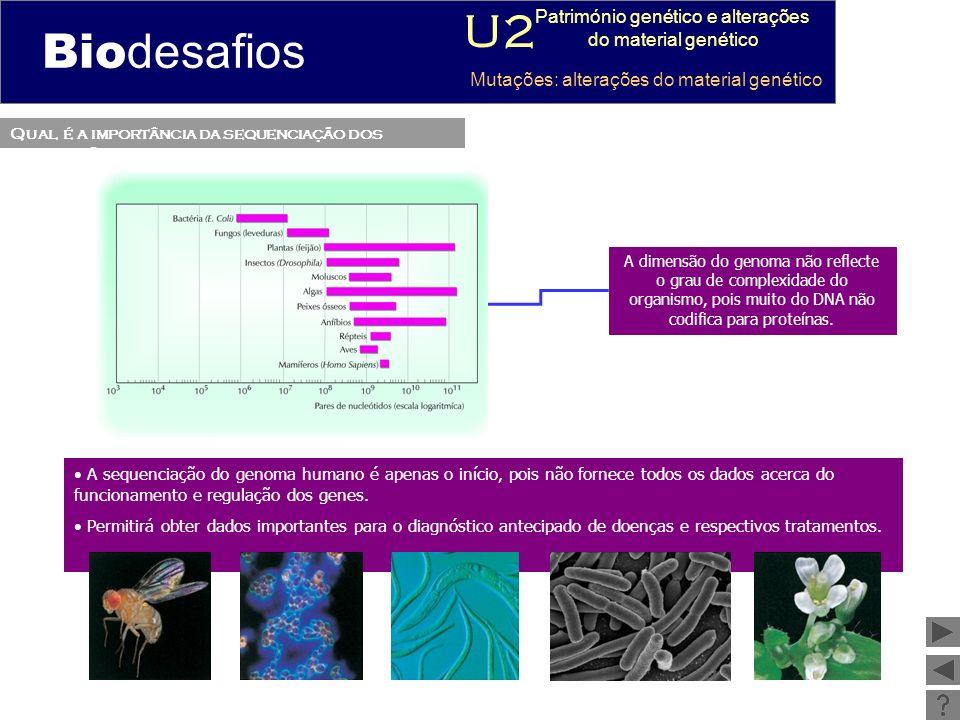 Qual é a vantagem de elaborar cariótipos.Mapeamento dos genes (localização).