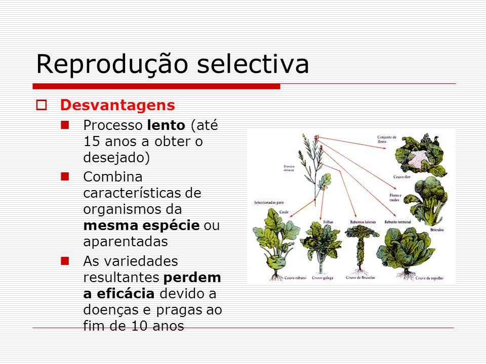 Reprodução selectiva Desvantagens Processo lento (até 15 anos a obter o desejado) Combina características de organismos da mesma espécie ou aparentada
