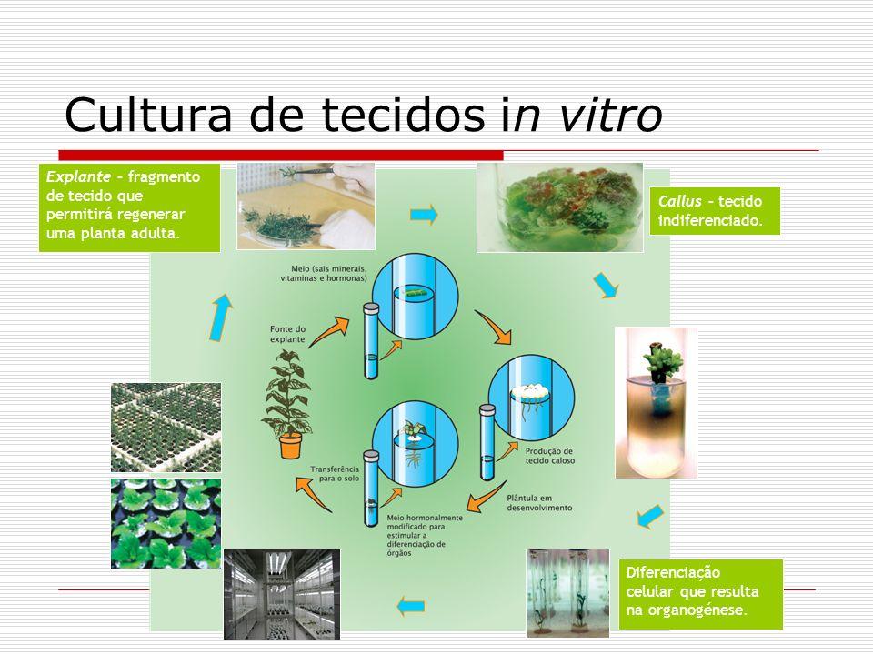 Cultura de tecidos in vitro Callus – tecido indiferenciado. Explante – fragmento de tecido que permitirá regenerar uma planta adulta. Diferenciação ce
