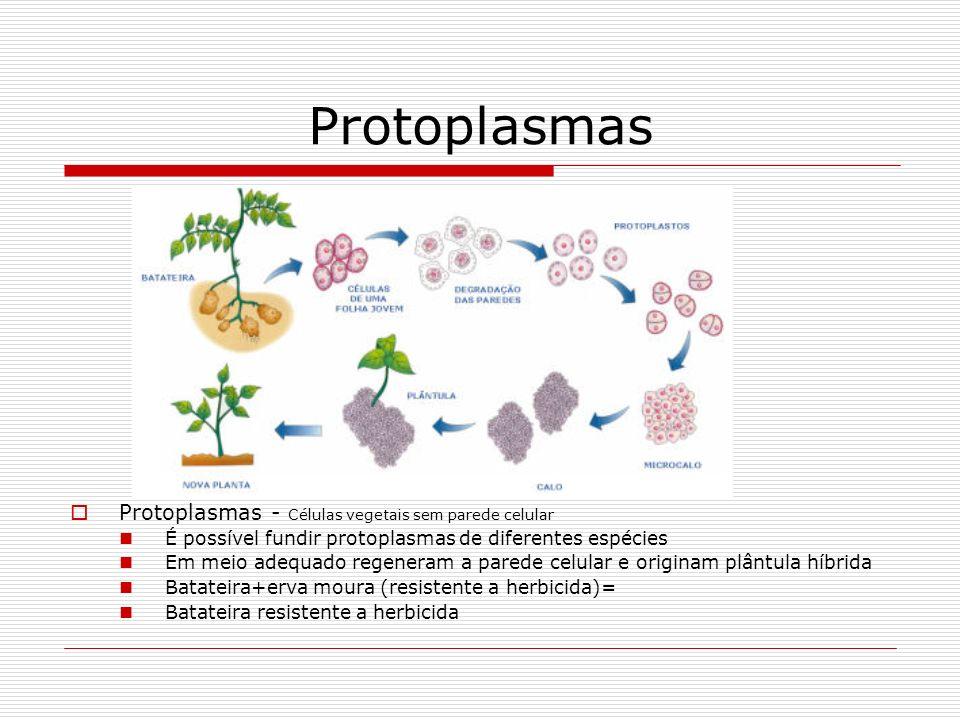 Protoplasmas Protoplasmas - Células vegetais sem parede celular É possível fundir protoplasmas de diferentes espécies Em meio adequado regeneram a par