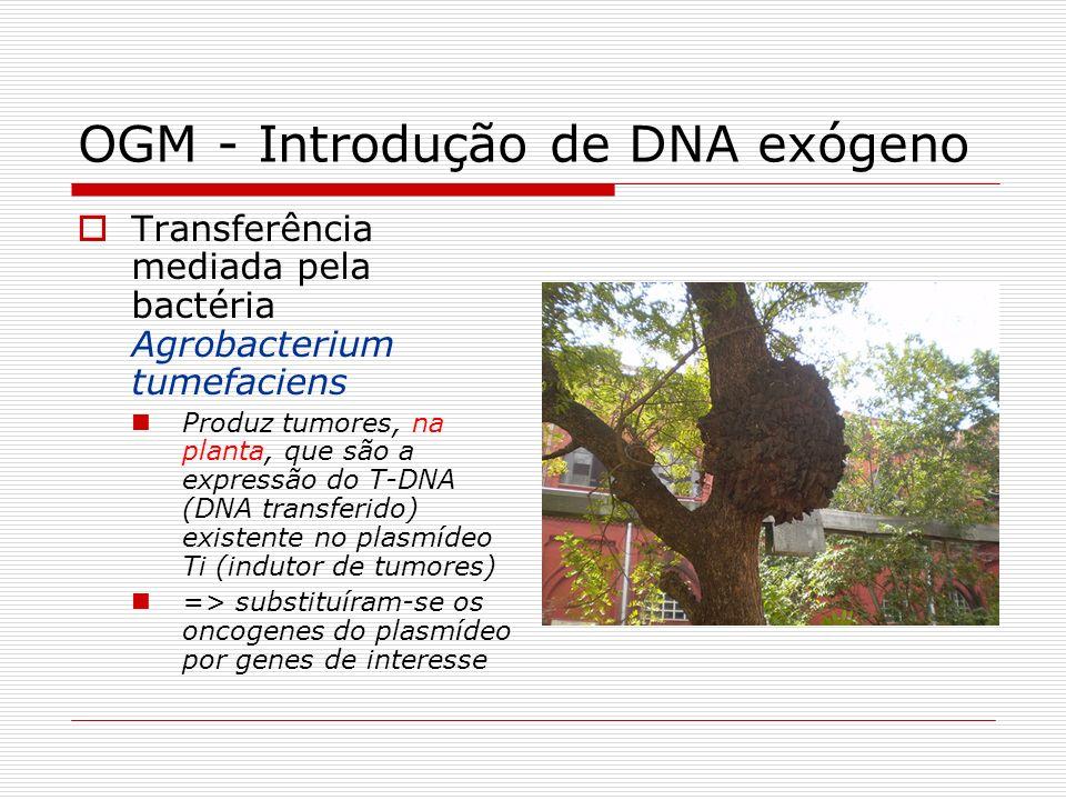 OGM - Introdução de DNA exógeno Transferência mediada pela bactéria Agrobacterium tumefaciens Produz tumores, na planta, que são a expressão do T-DNA