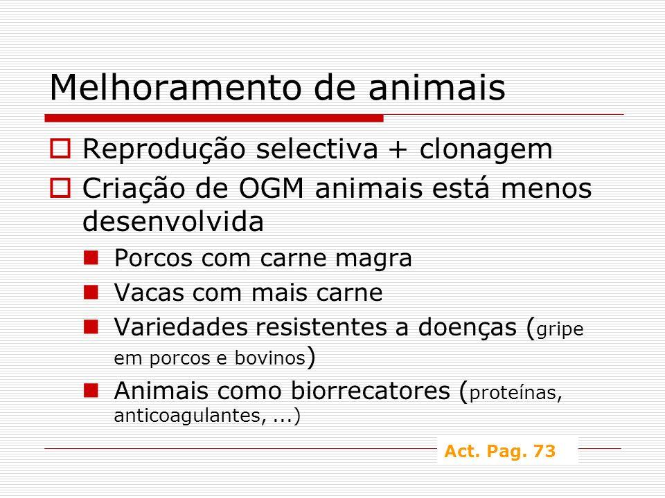 Melhoramento de animais Reprodução selectiva + clonagem Criação de OGM animais está menos desenvolvida Porcos com carne magra Vacas com mais carne Var