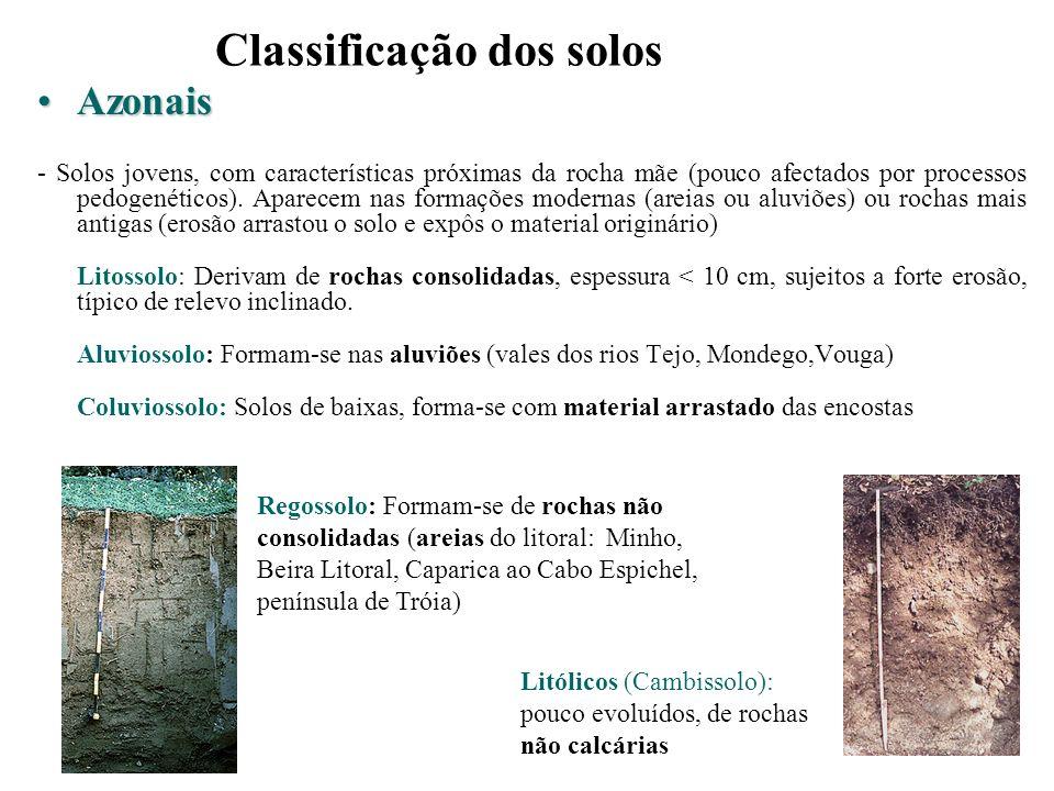 Classificação dos solos AzonaisAzonais - Solos jovens, com características próximas da rocha mãe (pouco afectados por processos pedogenéticos). Aparec