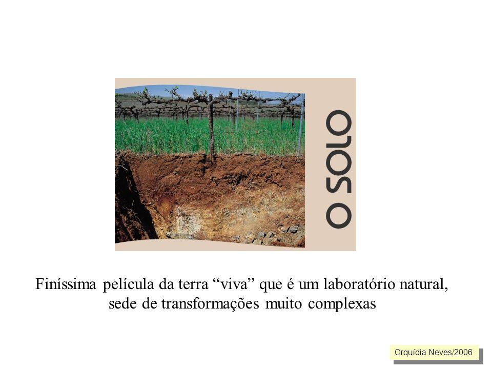 FORMAÇÃO DO SOLO fonte: www.cientic.com Horizontes - camadas com diferentes características, sobrepostas e sensívelmente paralelas á superfície Orquídia Neves/2006