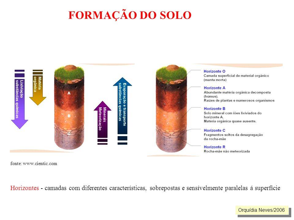 FORMAÇÃO DO SOLO fonte: www.cientic.com Horizontes - camadas com diferentes características, sobrepostas e sensívelmente paralelas á superfície Orquíd