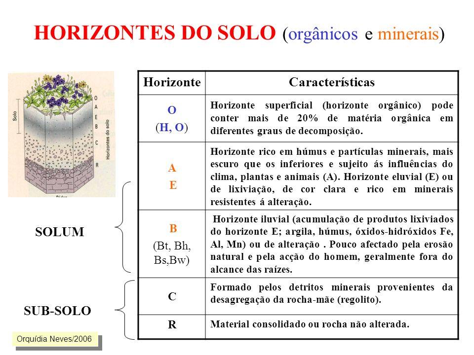 HORIZONTES DO SOLO (orgânicos e minerais) HorizonteCaracterísticas O (H, O) Horizonte superficial (horizonte orgânico) pode conter mais de 20% de maté
