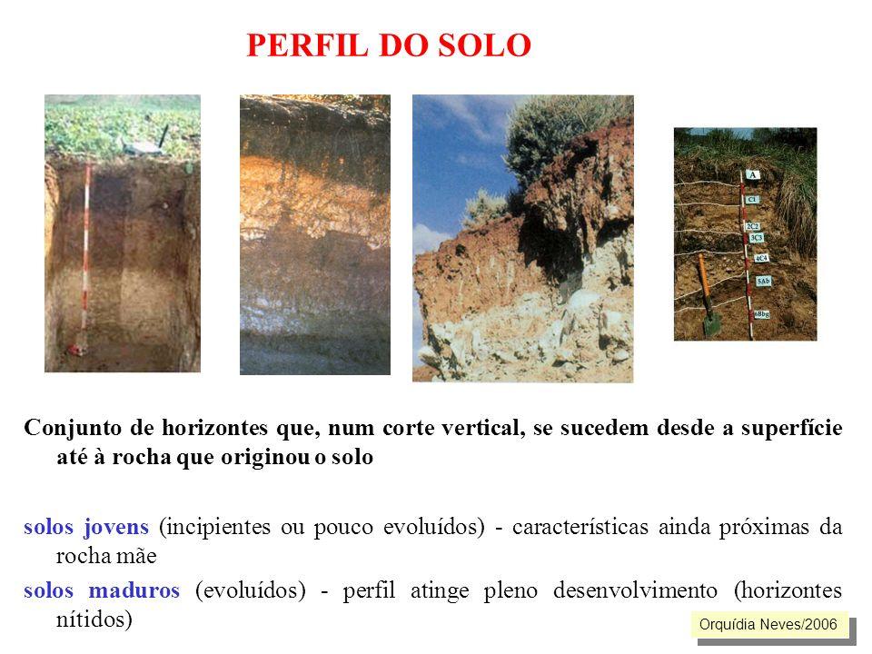 PERFIL DO SOLO Conjunto de horizontes que, num corte vertical, se sucedem desde a superfície até à rocha que originou o solo solos jovens (incipientes
